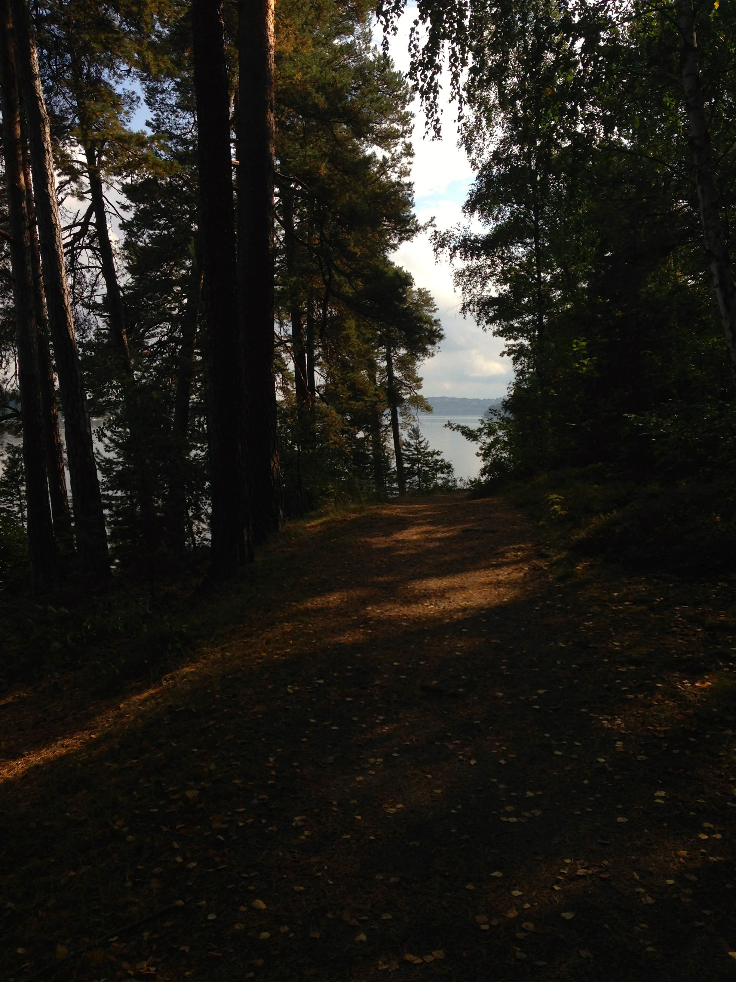 ...after that i continue through the calm and peaceful woods of djurgarden...